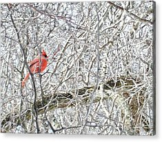 Red In White Acrylic Print by Justin  Randy