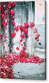 Acrylic Print featuring the photograph Red Ivy Leaves by Silvia Ganora
