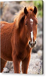 Red Acrylic Print by James Marvin Phelps