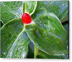 Red Jewel Acrylic Print by James Temple