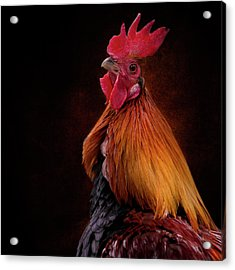 Red Jungle Fowl Rooster Acrylic Print