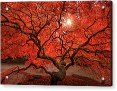 Red Lace Acrylic Print by Dan Mihai