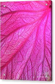 Red Leaf Arteries Acrylic Print