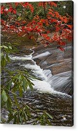 Red Leaf Falls Acrylic Print