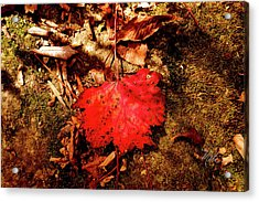 Red Leaf On Mossy Rock Acrylic Print