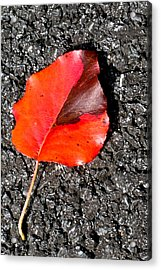 Red Leaf On Asphalt Acrylic Print by Douglas Barnett