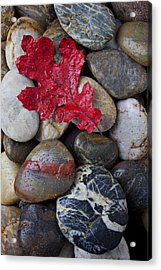 Red Leaf Wet Stones Acrylic Print