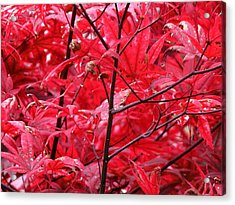 Red Leaves And Stems 2 Pd Acrylic Print by Lyle Crump