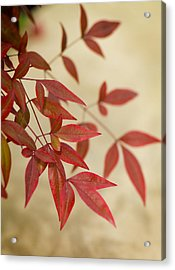 Red Leaves Acrylic Print by Bob Coates