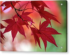 Acrylic Print featuring the photograph Red Leaves by Clare Bambers