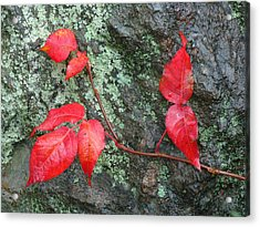 Red Leaves Acrylic Print by Juergen Roth