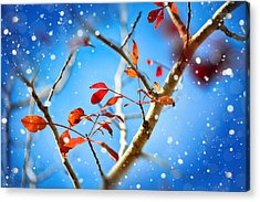 Red Leaves On Blue Background Acrylic Print