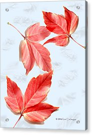 Red Leaves On Blue Texture Acrylic Print