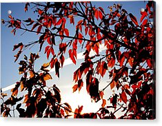 Red Leaves Part 1 Acrylic Print by Joseph Peterson