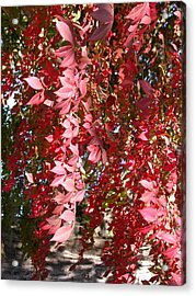Red Leaves Acrylic Print by Susan Boyes