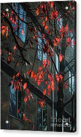 Acrylic Print featuring the photograph Red Leaves by Yulia Kazansky