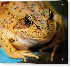Acrylic Print featuring the photograph Red Leg Frog by Jean Noren