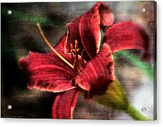 Acrylic Print featuring the photograph Red Lilly by Michaela Preston