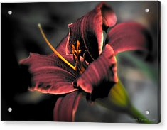 Acrylic Print featuring the photograph Red Lilly2 by Michaela Preston