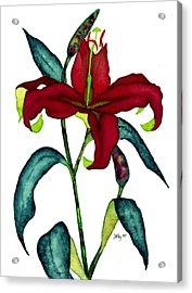 Red Lily Acrylic Print by Stephanie  Jolley