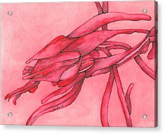 Red Lust Acrylic Print