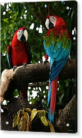 Red Macaws Acrylic Print