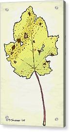 Red Maple Illustration Acrylic Print by Jamie Jorgensen
