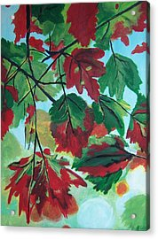Red Maple Acrylic Print by Krista Ouellette