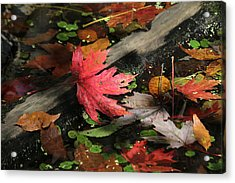 Acrylic Print featuring the photograph Red Maple Leaf In Pond by Doris Potter
