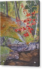 Red Maple Leaves Acrylic Print by Debbie Homewood