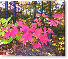 Red Maple Leaves Acrylic Print by Lanjee Chee