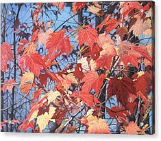 Red Maples Acrylic Print by - Harlan