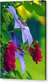 Red Meets Lavender Acrylic Print