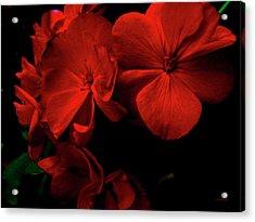 Red  Midnight Magic Flowers Acrylic Print