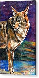 Red Mountain Wolf Acrylic Print by John Keaton