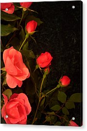 red Acrylic Print by Nereida Slesarchik Cedeno Wilcoxon