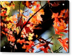 Red Oak Leaves In Fall Acrylic Print by Linda Phelps