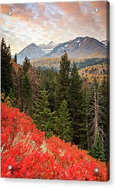 Red Oak Vertical Acrylic Print