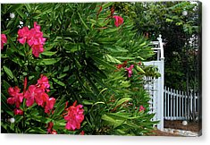 Acrylic Print featuring the photograph Red Oleander Arbor by Marie Hicks