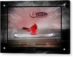 Red On Red Acrylic Print by Ericamaxine Price