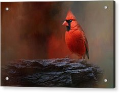 Red On The Rocks - Cardinal Bird Art Acrylic Print