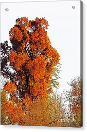 Red-orange Fall Tree Acrylic Print