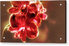Acrylic Print featuring the photograph Red Orchid by Isabella F Abbie Shores FRSA
