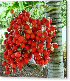 Red Palm Tree Fruit Acrylic Print by Kirsten Giving