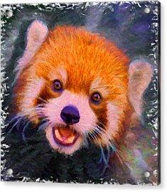 Red Panda Cub Acrylic Print by Caito Junqueira