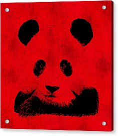 Red Panda Acrylic Print by Laura Brightwood