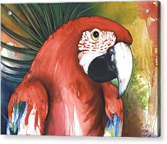 Red Parrot Acrylic Print by Anthony Burks Sr