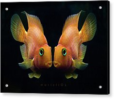 Red Parrot Fish Acrylic Print by MariClick Photography