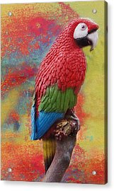 Red Parrot Acrylic Print by Art Spectrum
