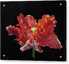 Red Parrot Tulip - Oils Acrylic Print by Roena King